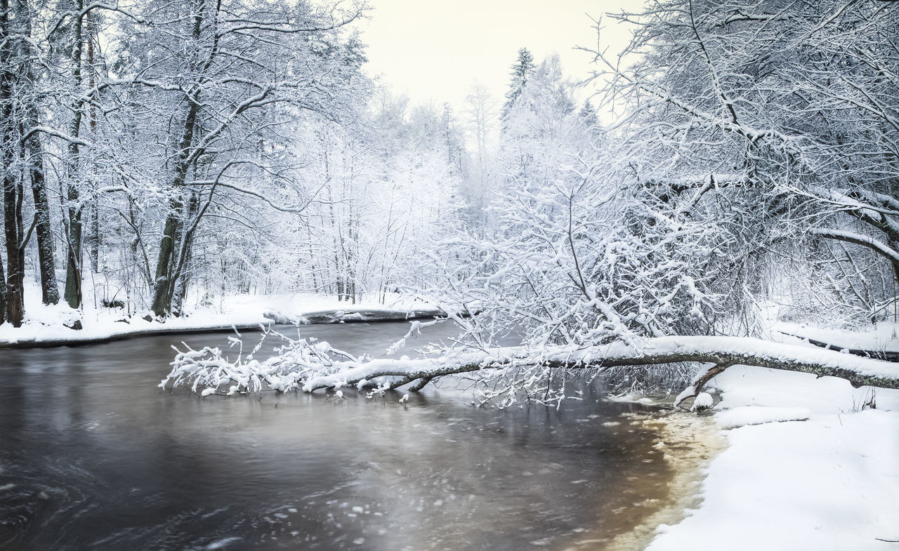 Scenics winter landscape in riverside Finland Beauty In Nature Cold Temperature Day Fallen Tree Finland Forest Frozen Landscape Light And Shadow Nature No People Outdoors Rapids River Riverside Scenics Sky Snow Snowy Tranquility Tree Water White Winter Wintry