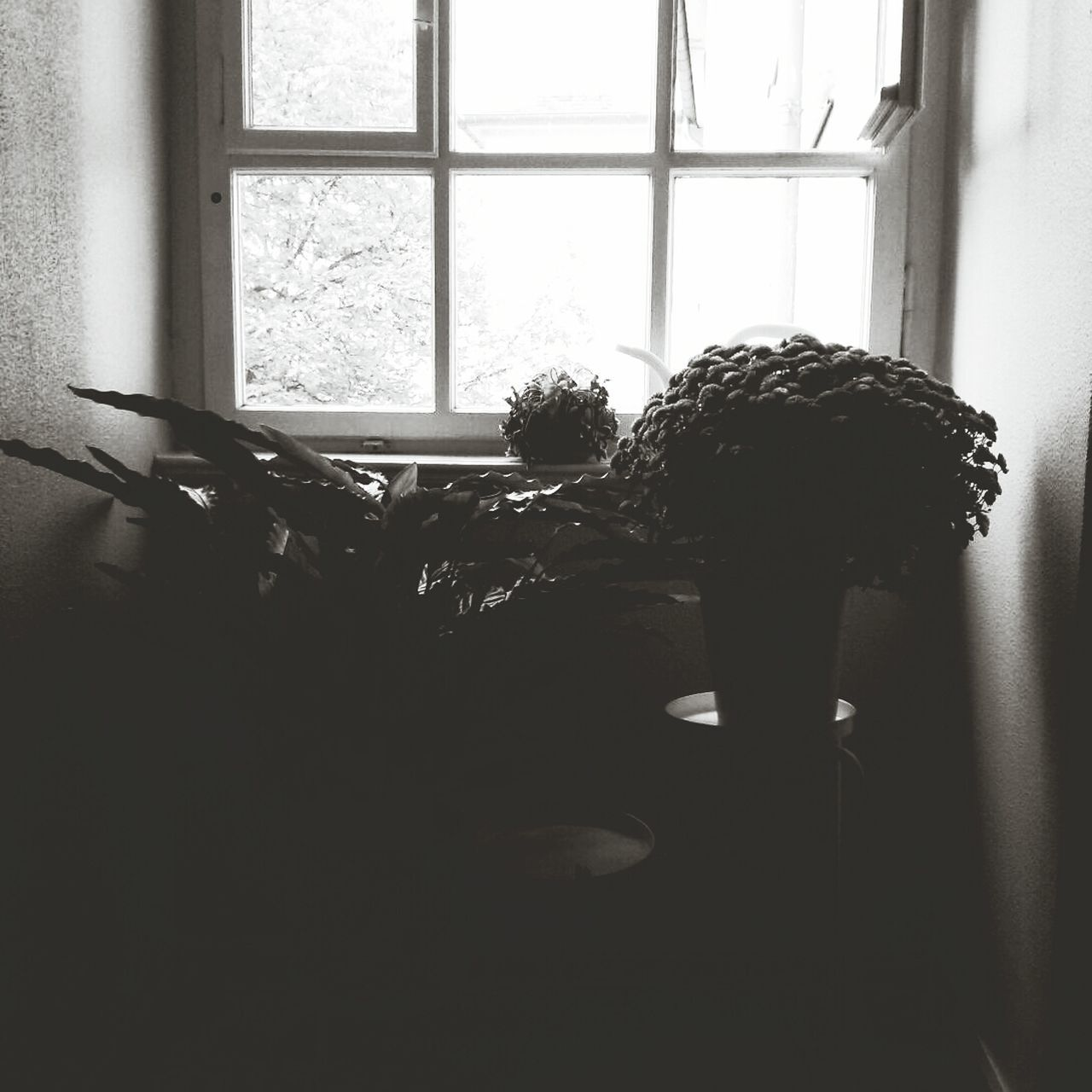 Potted Plants By Window