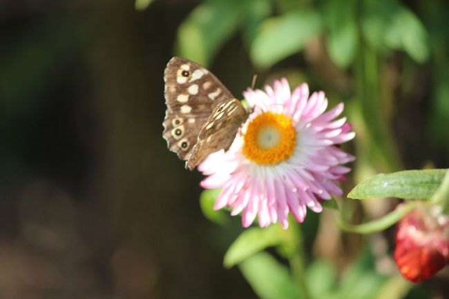 Butterfly EyeEm Nature Lover Nature_collection Nature Flower Collection Flower Butterflies