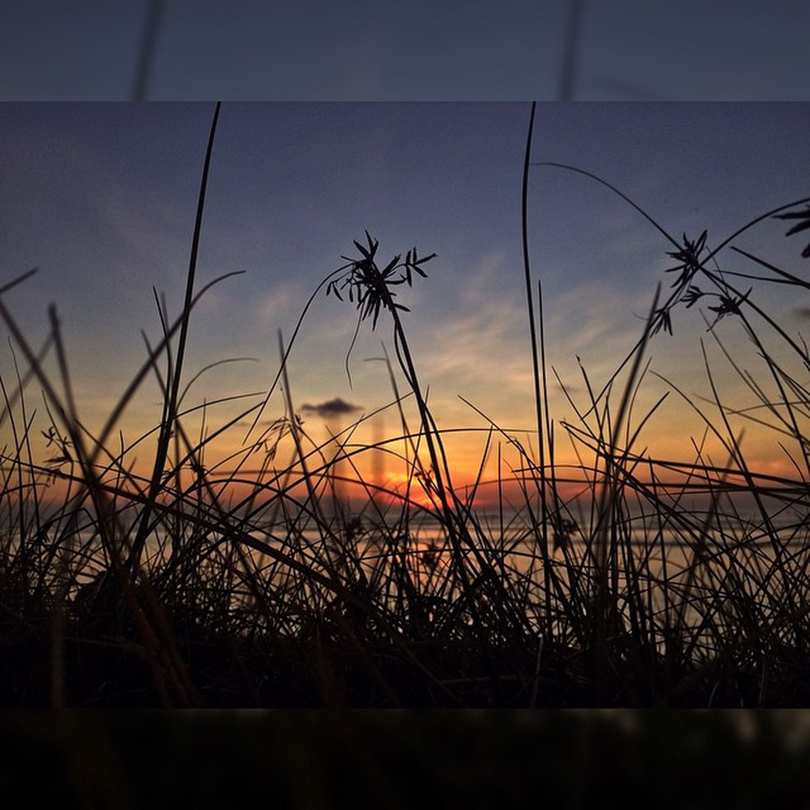 sunset, sky, tranquility, tranquil scene, plant, water, scenics, grass, nature, beauty in nature, silhouette, idyllic, growth, sun, orange color, cloud - sky, focus on foreground, cloud, sea, outdoors