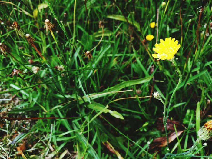 Nature Growth Plant Flower Outdoors Green Color No People Beauty In Nature Flower Head Field Day Freshness Fragility Grass Close-up Insect