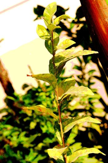 Plant Nature Growth Leaf Day No People Outdoors Green Color Tree Close-up Freshness