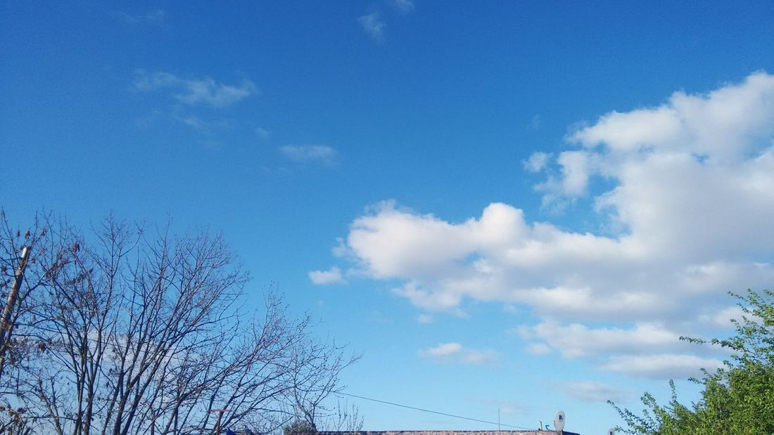 ☀☁ Blue And White Sky And Clouds Enjoying Life Relaxing Me And My Camera Green Eyeem Photography Eyeemphotography EyeEm Gallery Eyeem Nature EyeEm Best Shots Unfiltered Hello World Good Day Taking Photos Sun EyeEm Sky Tree Tuesday