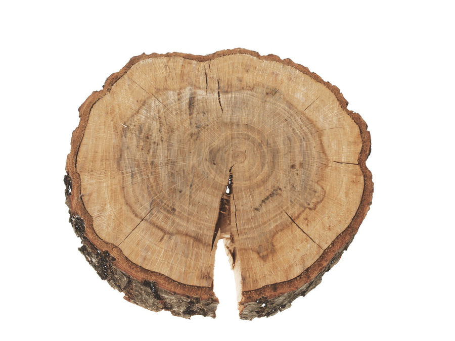 Circle Close-up Cross Section Cut Out Day Log Nature No People Outdoors Timber Tree Tree Ring Tree Stump White Background Wood - Material