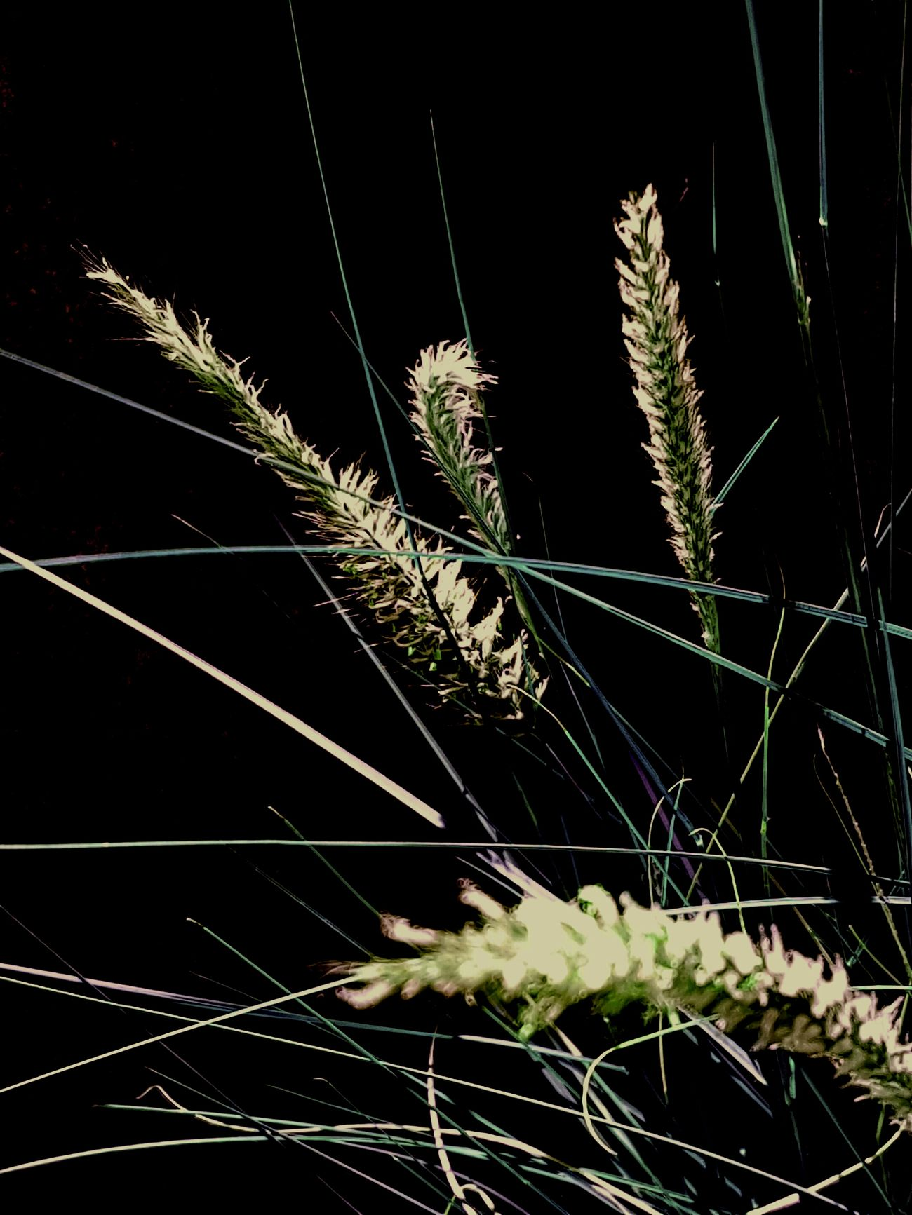 https://youtu.be/Gi_m-HIiwww🎶 Beauty In Nature Nature Backgrounds Bush Reeds Night Macro Still Life Studio Shot First Eyeem Photo Close Up Minimalism Black Background Dark Photography EyeEm Best Shots Darkness And Beauty Flower Leaves Simplicity Dark Background Australia Outdoors My Unique Style Light And Shadow