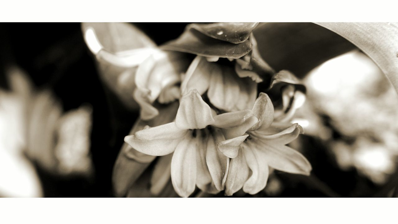 Bombarded with old photos. Forgot About This Picture Desaturated Macro Beauty Flowers Nature