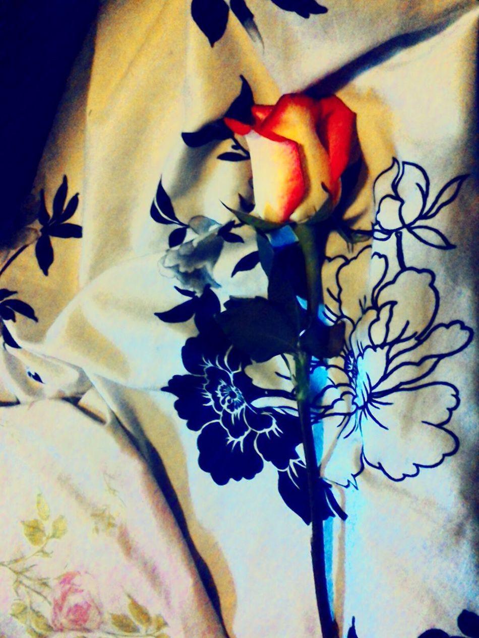 Eyeemflowerlover Flowerperfection Just Perfectly Perfect Gorgeous ♥ Bestoftheday Beautiful Flowers EyeEm Best Shots EyeEm Flower Ownphotography Pretty♡ Great Atmosphere Nature Photography Pure Bliss Love❤ Atmosphere Gorgeous Light Natural Beauty Eyeemflowercollection EyeEmbestshots Eyeemphotooftheday Confidence Is Key ! Pastel Power