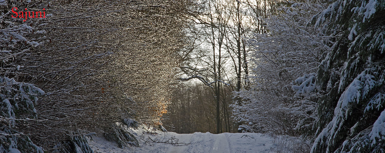 winter, snow, cold temperature, nature, weather, bare tree, tree, frozen, no people, outdoors, tranquility, beauty in nature, tranquil scene, forest, scenics, day, landscape, branch, sky