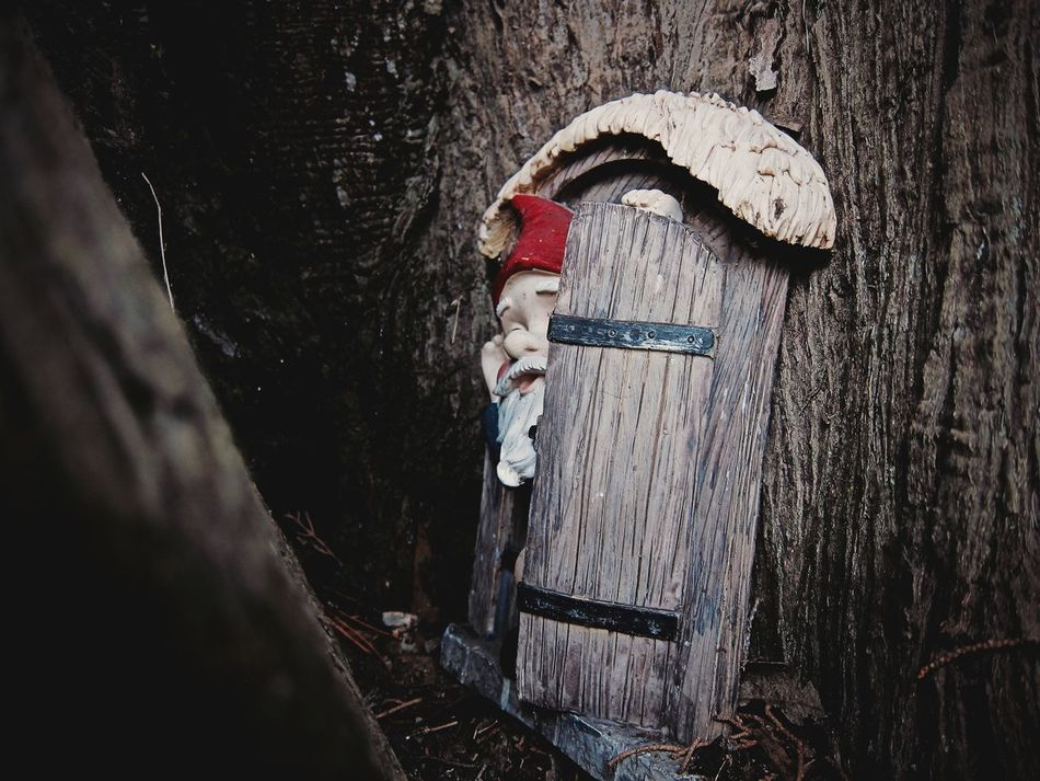 Knock, knock, who's there? 🎅🌳 Tree Tree Trunk Nature Outdoors Day Beauty In Nature Gnome Gnomes Gnomeworld Gnomes Home Gnome Home Gnomes Of EyeEm Park Trees Trees And Sky Hidden Gems  Hidden Hidden Beauty Streetphotography Streetphoto_color EyeEm Best Shots Eye4photography  EyeEm Gallery Sony A6000 Red