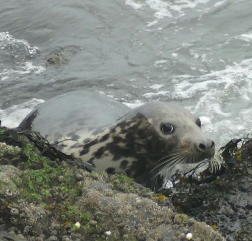 S Sea Water Nature Animals In The Wild No People Animal Wildlife Outdoors One Animal Seal - Animal Animal Themes Sea Life Beauty In Nature Mammal Aquatic Mammal Swimming Rocks And Water Seal On The Rock Seal Rocks