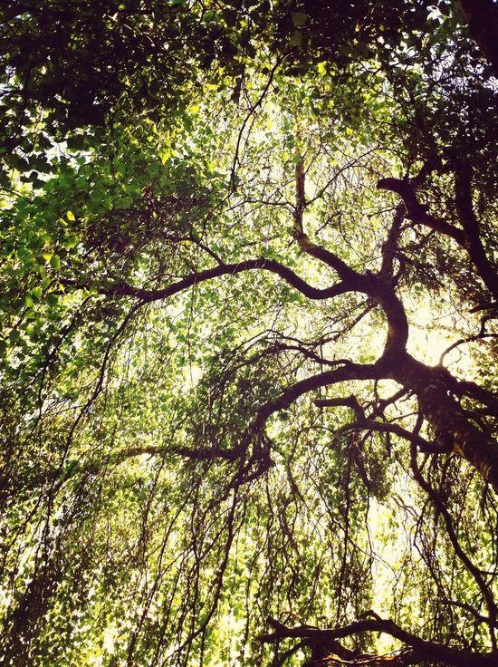 Sitting in the shade enjoying life Enjoying Life TreePorn EyeEm Nature Lover