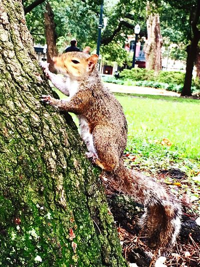 Did Someone Say Let's Take A Walk In The Park. Squirrels Of The City Find Your Own Tree Just Feed Me And We Are All Good 👍