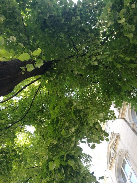 Tree Growth Green Color Day Low Angle View Outdoors Nature Architecture No People Branch Building Exterior Beauty In Nature Sky