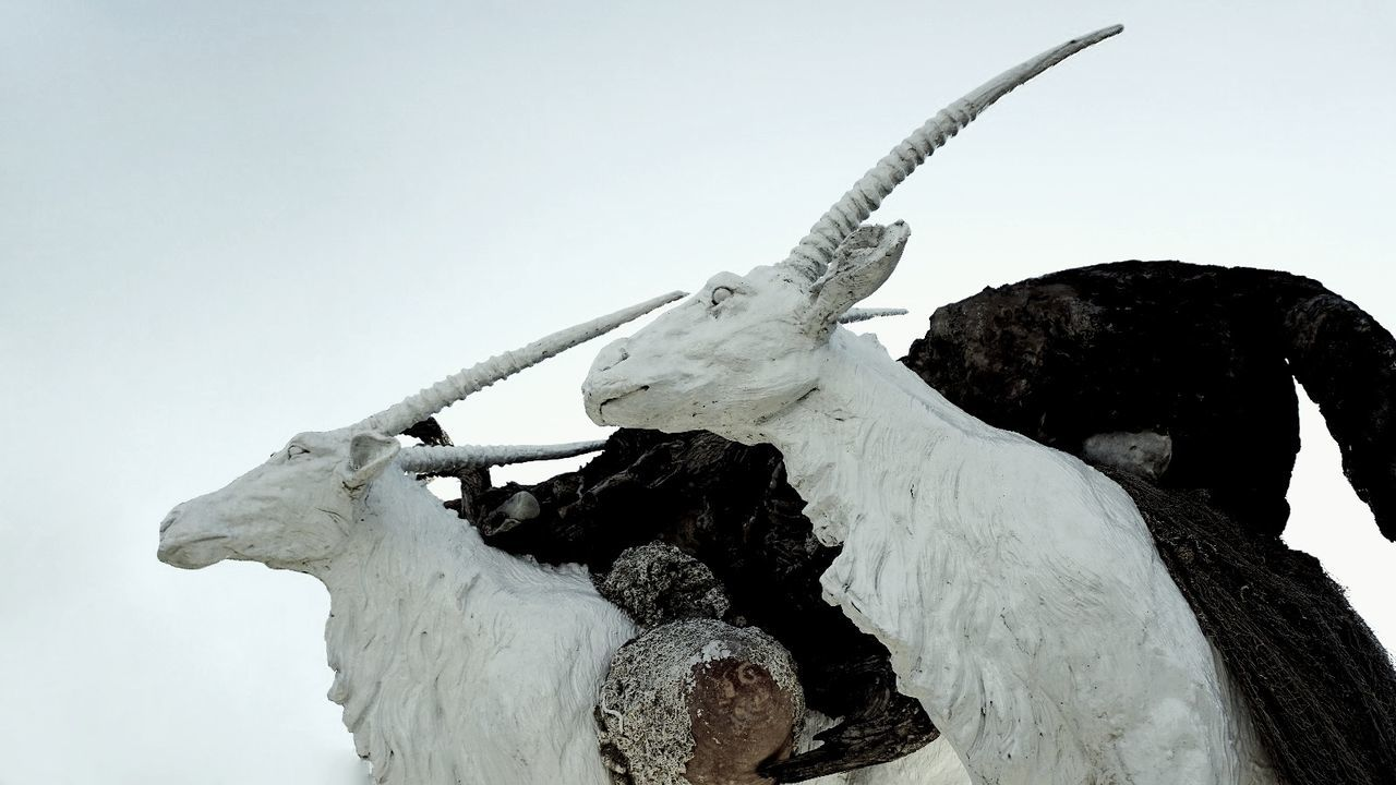 animal skull, low angle view, statue, animal bone, no people, sculpture, outdoors, day, nature, sky, animal themes, close-up