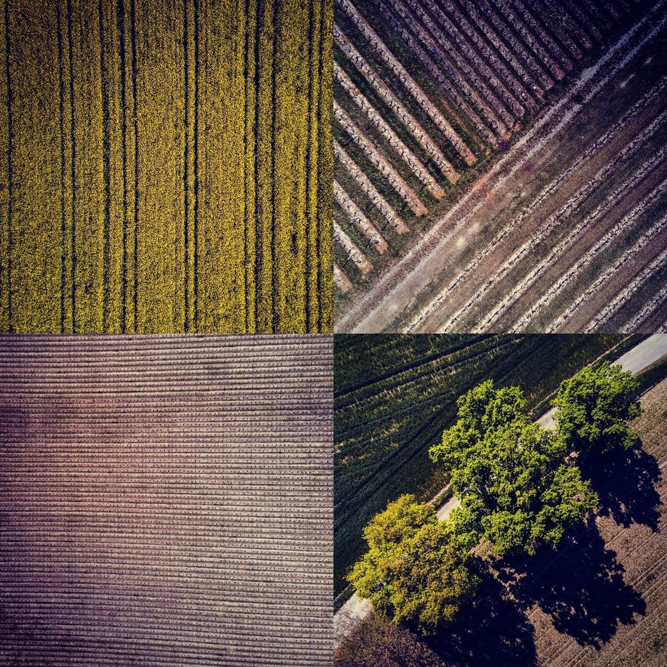 Tree No People Agriculture Outdoors Growth Day Nature Drone  Dronephotography Geneva Landscape Nature Tranquil Scene Tree