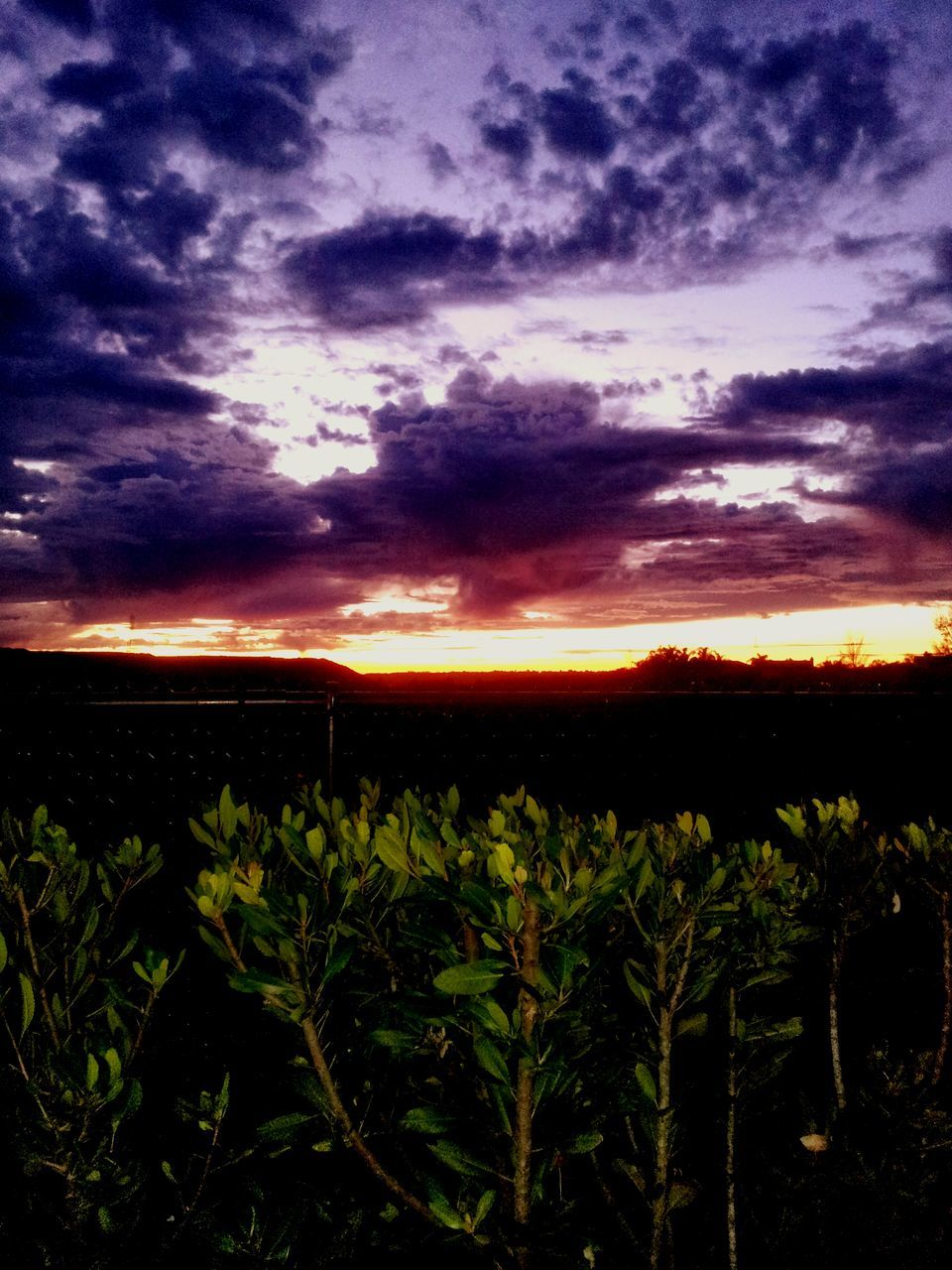 nature, agriculture, sunset, field, growth, sky, landscape, beauty in nature, farm, tranquility, scenics, tranquil scene, crop, cloud - sky, plant, rural scene, no people, silhouette, outdoors, tree, day