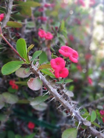 Il giardino della nonna Beauty In Nature Nature Green Color