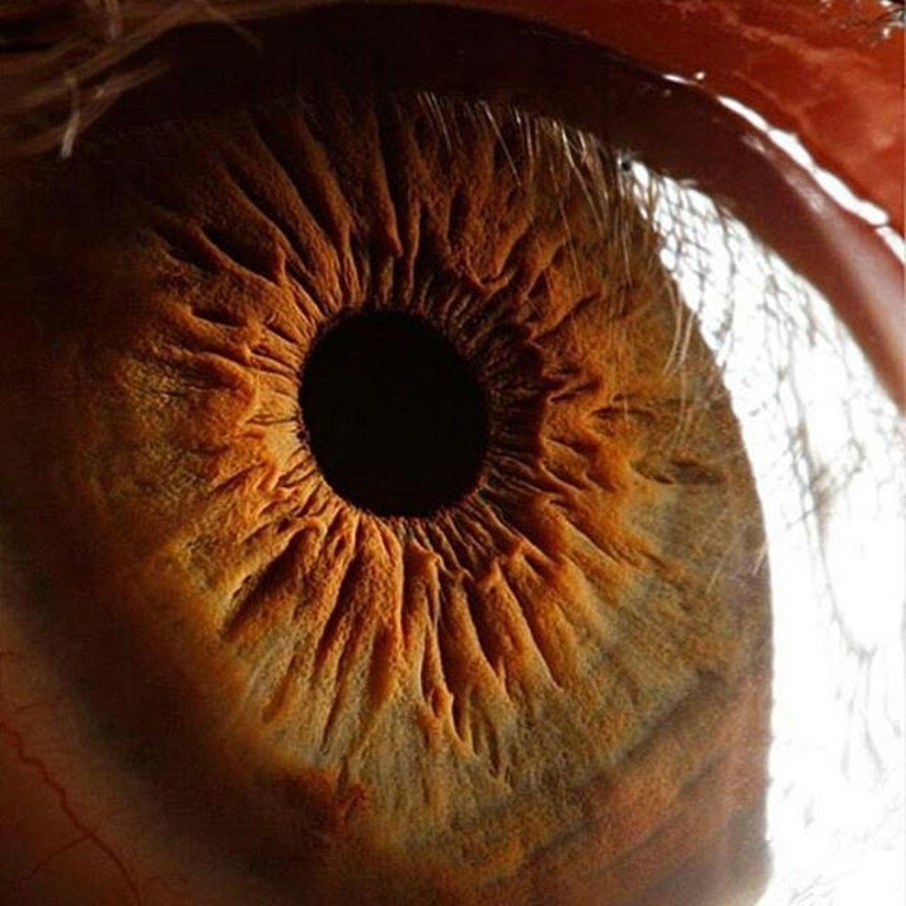 تصاویر کمتر دیده شده از چشم انسان