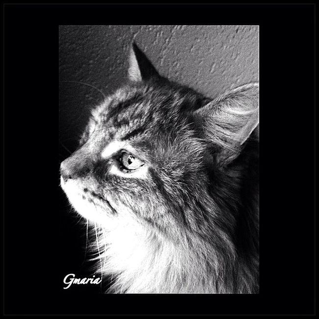 Blackandwhite Cats Catstagram Catsofinstagram
