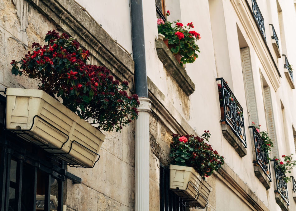 Beautiful stock photos of paris,  Architecture,  Building Exterior,  Built Structure,  Christmas Decoration