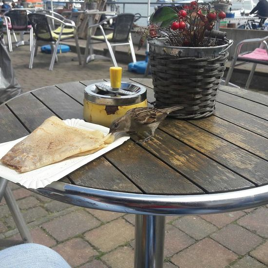 Guten Appetit. Chair Table Food And Drink Day Food Outdoors No People Freshness Bird Hungry Bird Crêpes Feeding