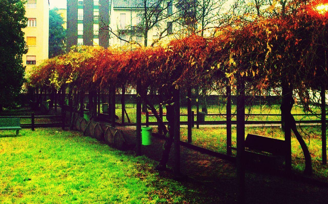 Urban Nature TreePorn Autumn Trees