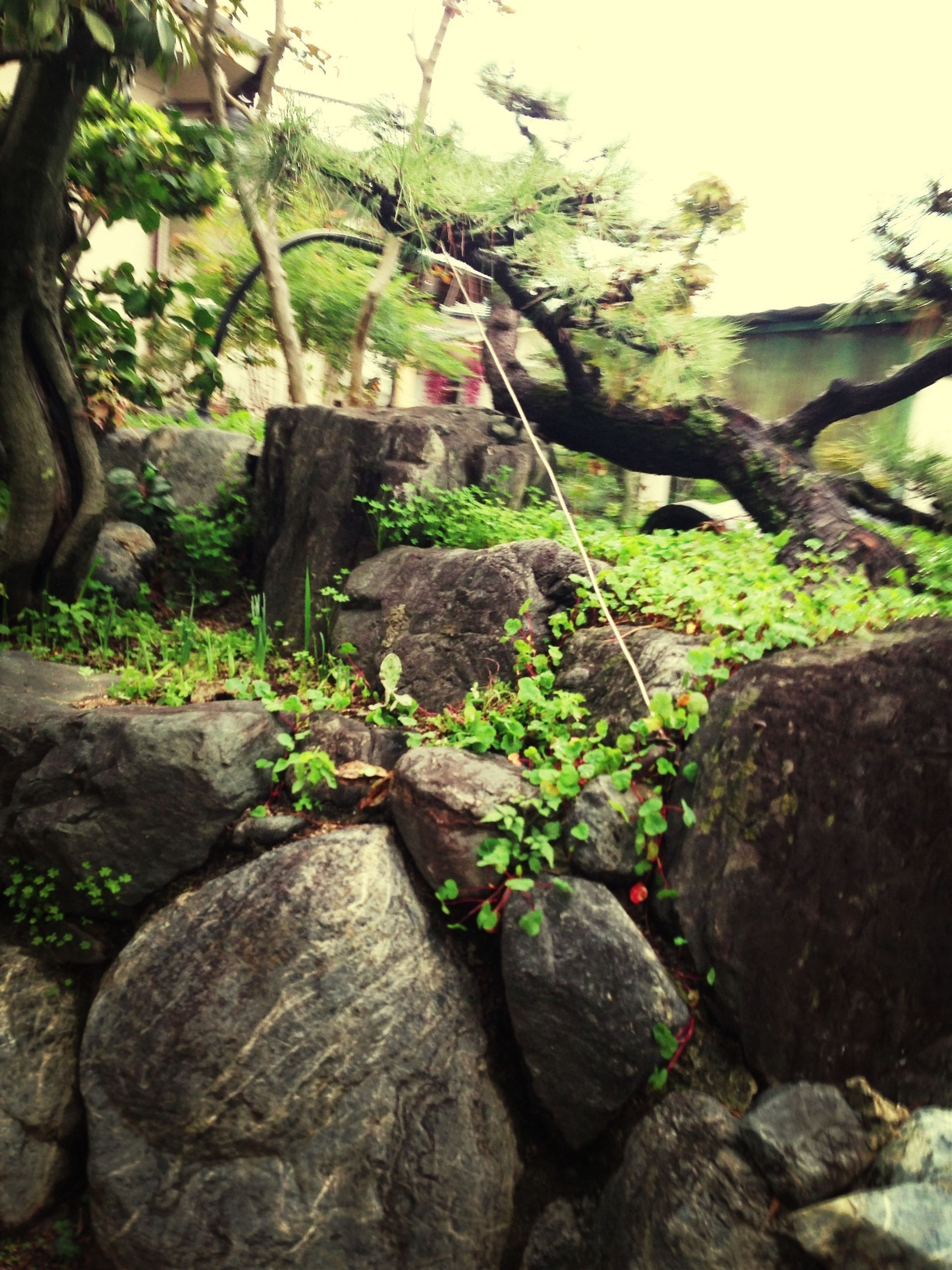 growth, plant, tree, rock - object, nature, green color, branch, beauty in nature, tree trunk, stone wall, rock, tranquility, growing, leaf, moss, day, outdoors, stone - object, stone, green