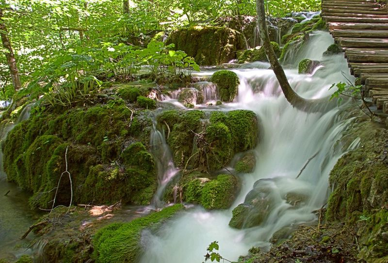Water Day waterfall plitvice outdoors Waterfall Forest Beauty In Nature Scenics Moss Vacations Croatia EyeEmNewHere
