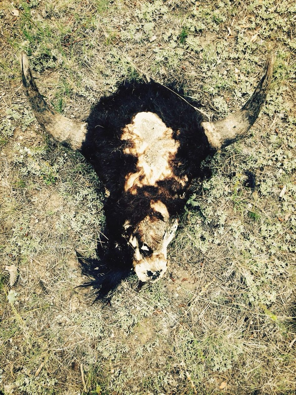 Beautiful stock photos of death, Animal Themes, Close-Up, Day, Dead Animal