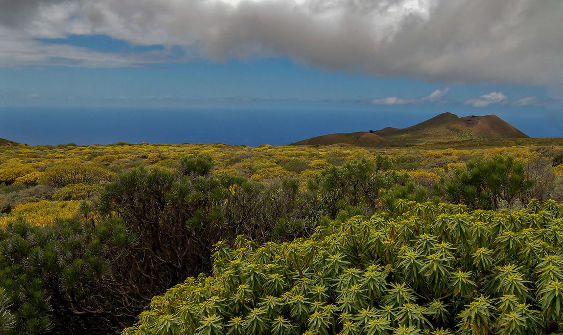 EL HIERRO island Canary Beauty In Nature Blue Canary Islands Cloud El Hierro Island Green Green Color Growth Horizon Over Water Idyllic Landscape Lush Foliage Majestic Mountain Nature Non-urban Scene Plant Remote Scenics Sea Sky Tourism Tranquility Travel Destinations Vacations