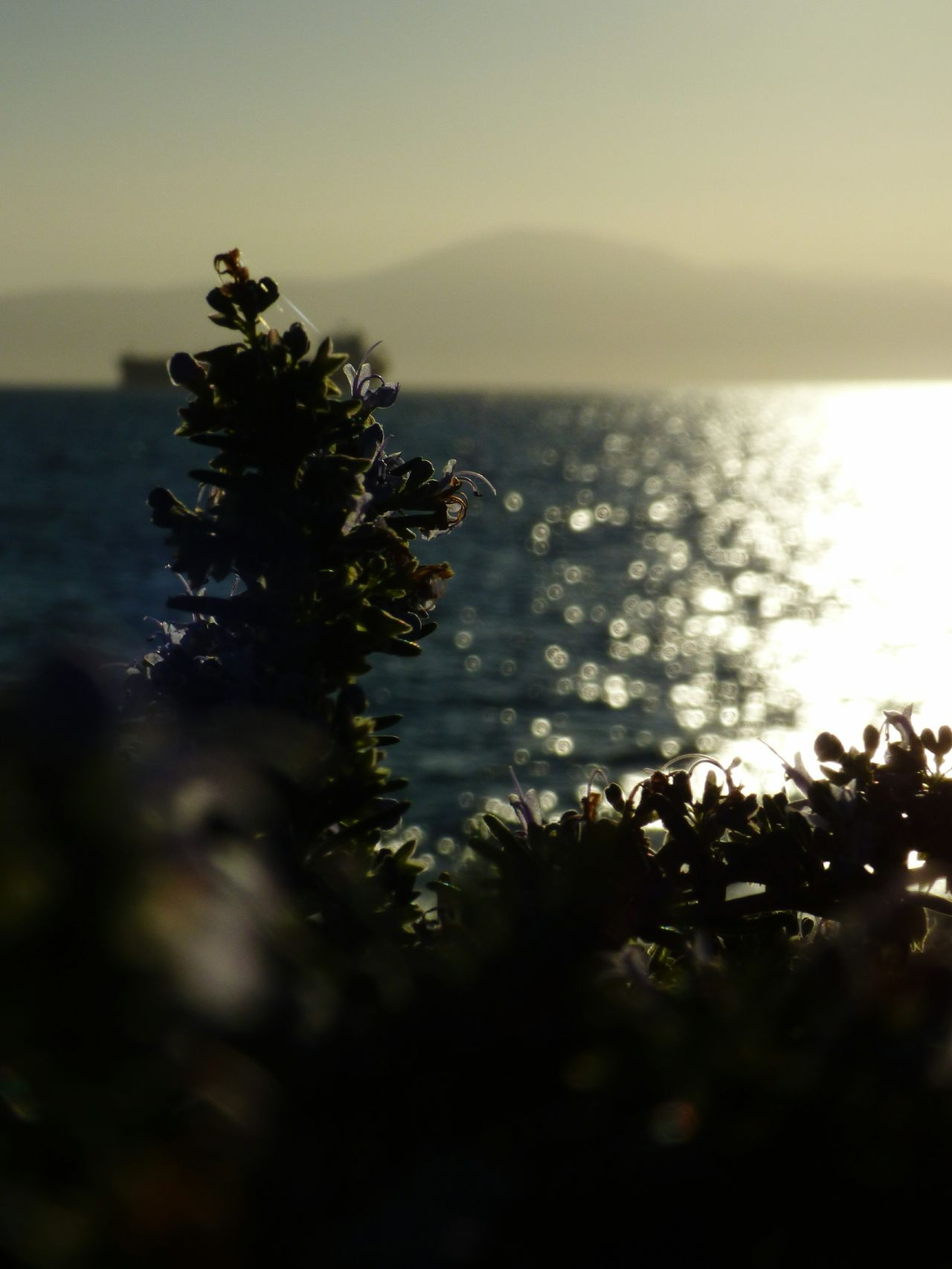 Photooftheday Kalamata,Greece Beach Day Water Beauty In Nature No People Nature Outdoors Close-up Horizon Over Water Vacations Sky Clear Sky Landscape ArtWork City Cloud - Sky Kalamata Sun Travel Destinations Focus Micro Nature Zoom In Zoomzoom