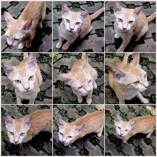 Street Cat.. Animal By ITag Pets By ITag