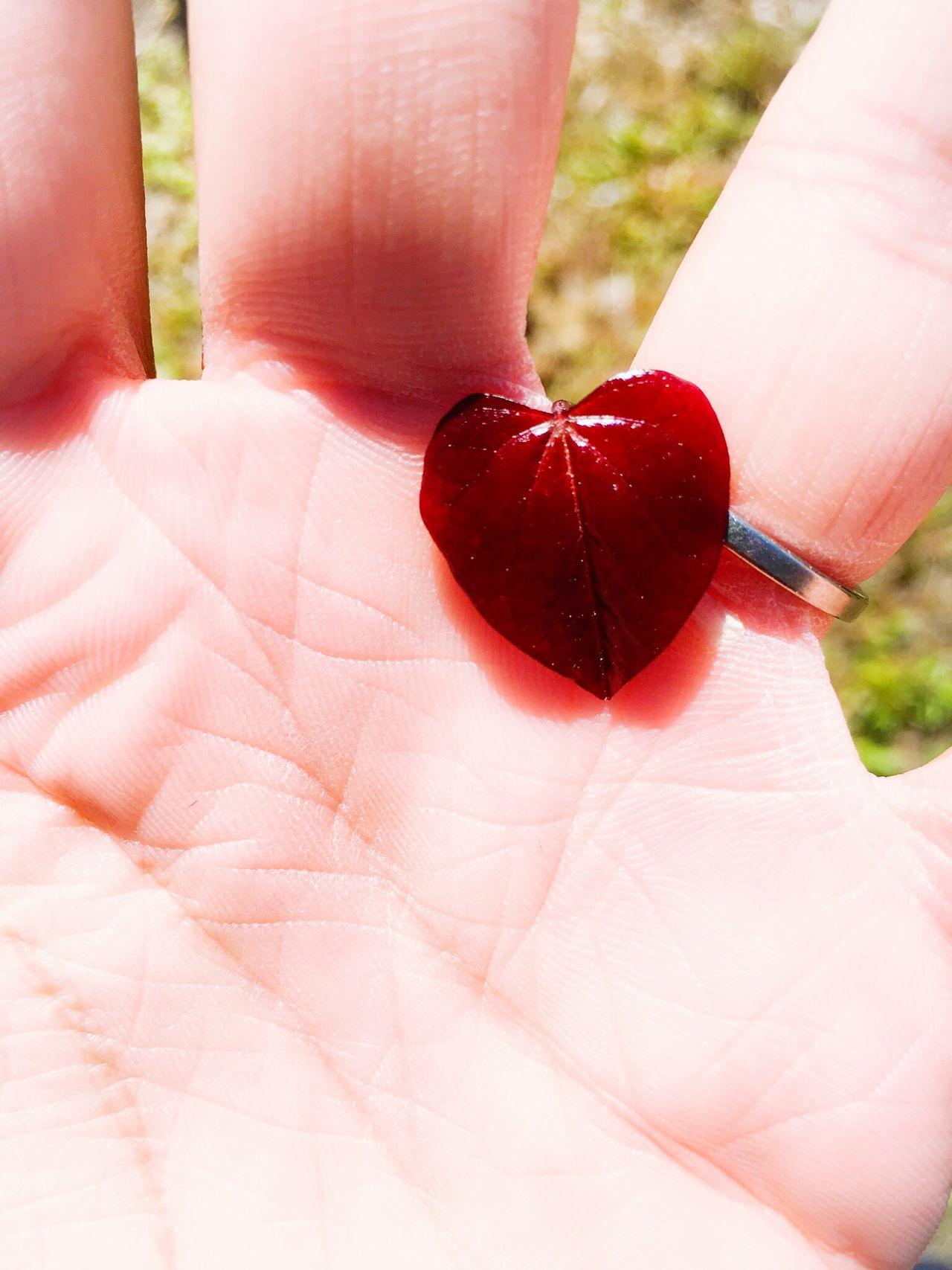 Human Body Part Red Heart Shape Human Hand Close-up One Person Love People Adults Only Outdoors Day Only Women Adult Nature