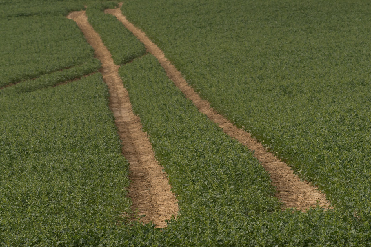 Tractor traces in the field Agriculture Beauty In Nature Day Field Grass Green Color Growth Nature Nature Nature_collection New Life No People Outdoors Traces Background