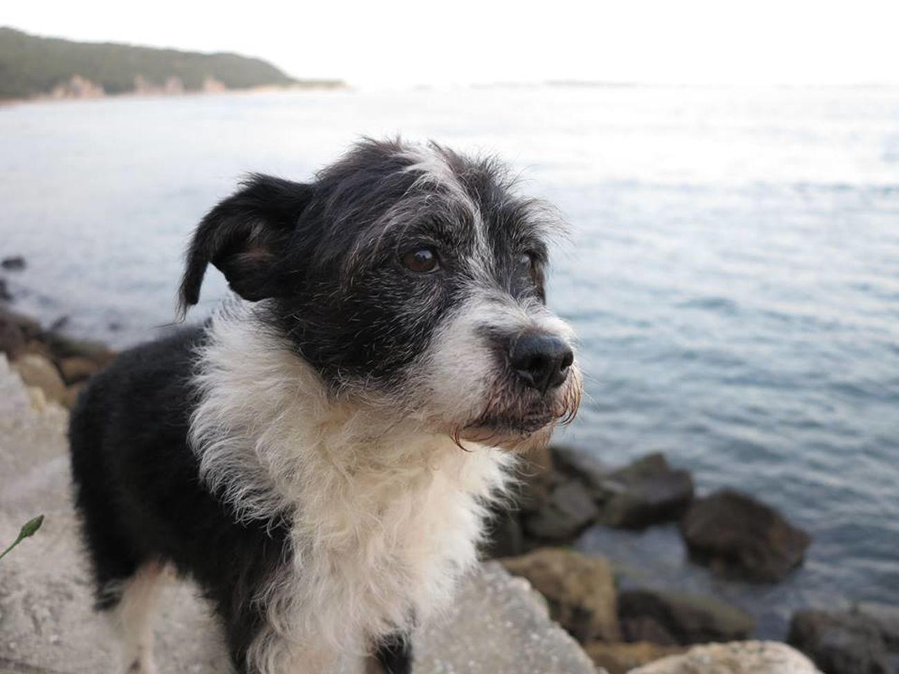 My Peuga Portrait Beach Pets Black And White Dog🐕 Miss My Dog No Filter, No Edit, Just Photography Perfect Days Beachlovers