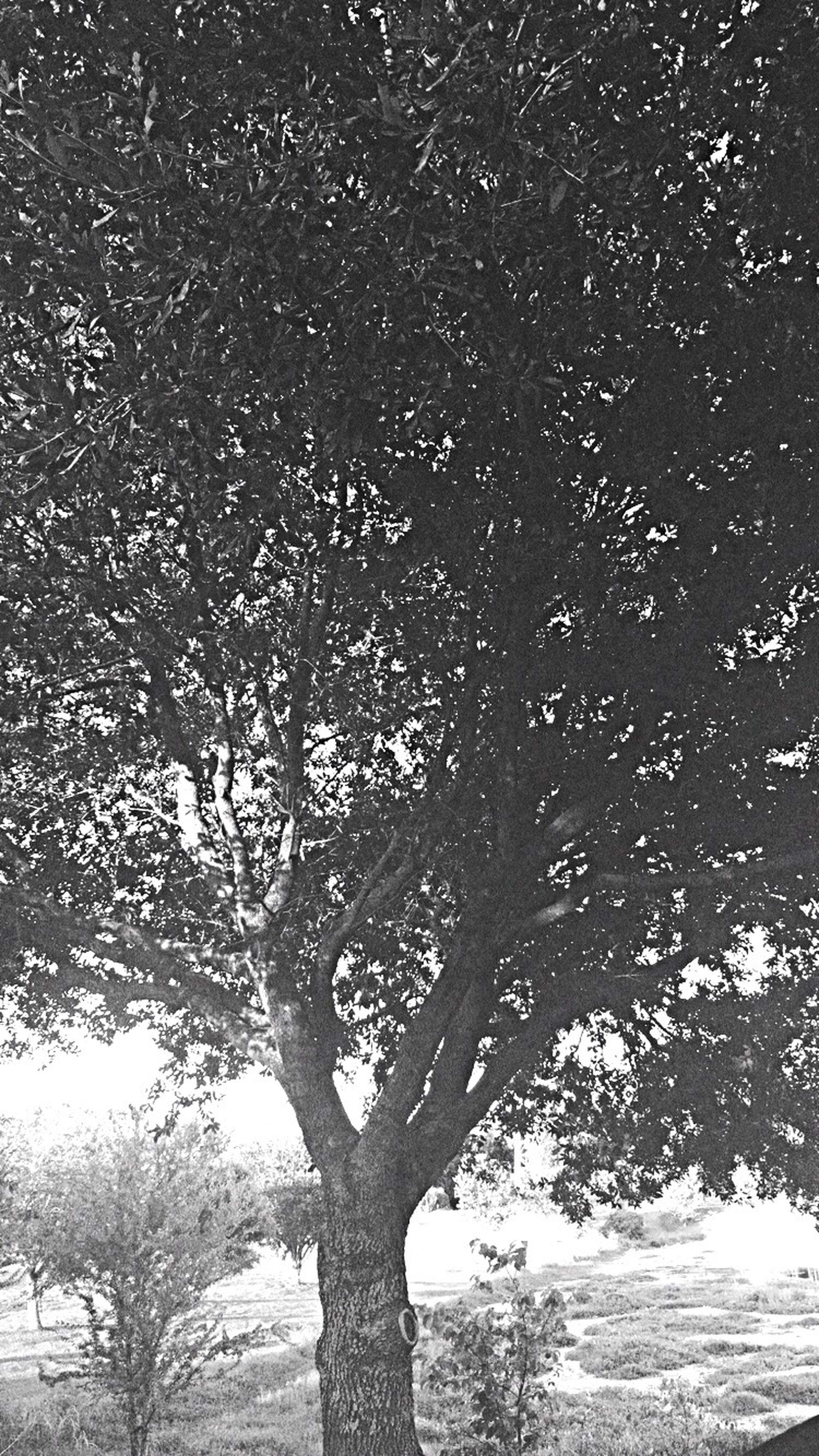 Beauty in darkness Blackandwhitetreephoto Checkitout Views Trees Angles Upcloseview EyeemPhotos Nature Natural