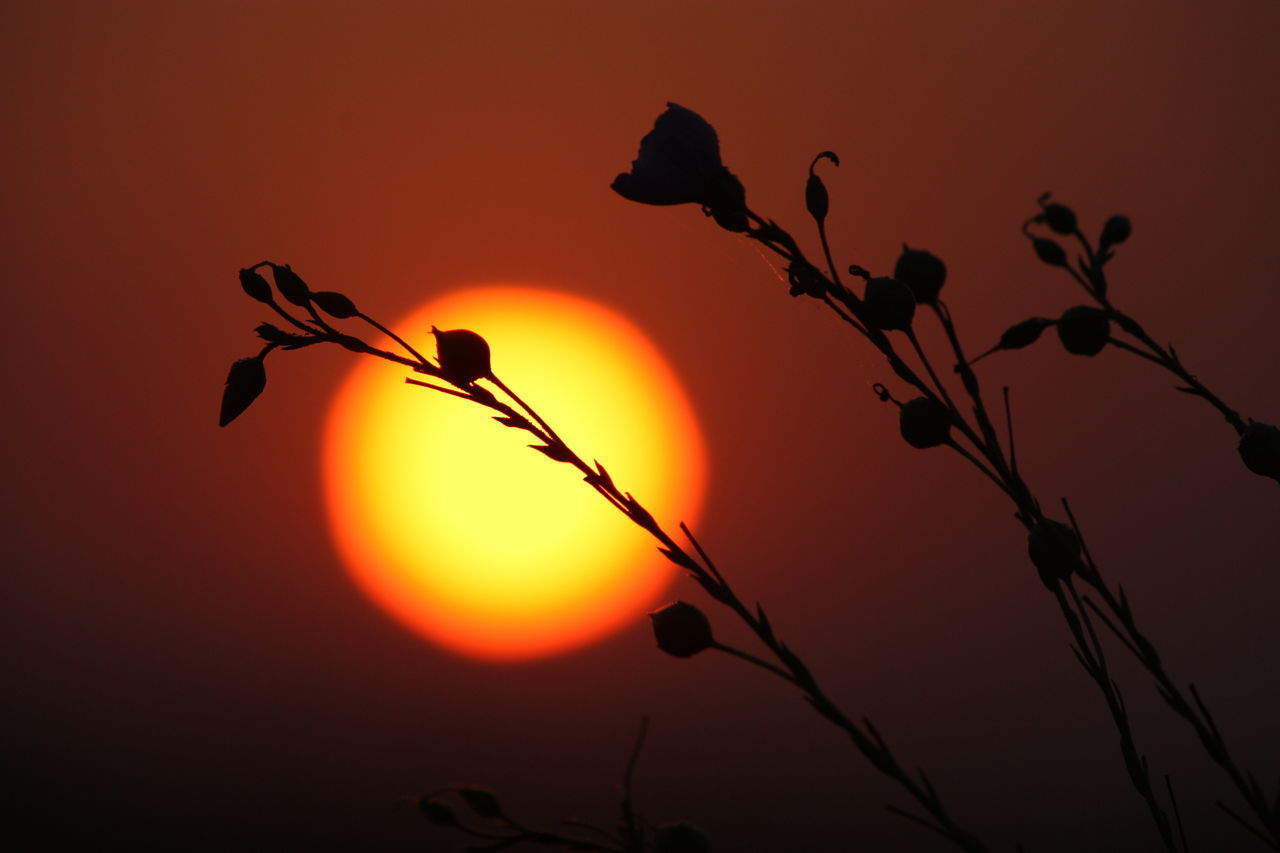 sunset, orange color, sun, nature, beauty in nature, outdoors, growth, silhouette, no people, plant, sky, scenics, tree, flower, close-up