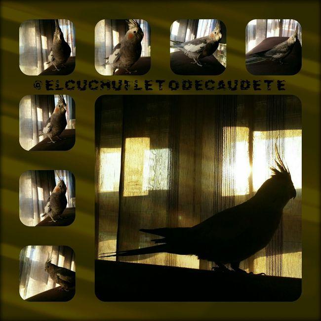 Relaxing EyeEm Best Edits EyeEm Best Shots Mi Pollo Y Yo