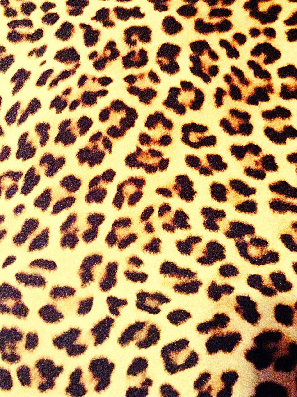 no people, spotted, pattern, backgrounds, full frame, animal themes, nature, close-up, mammal, indoors, day, leopard, food