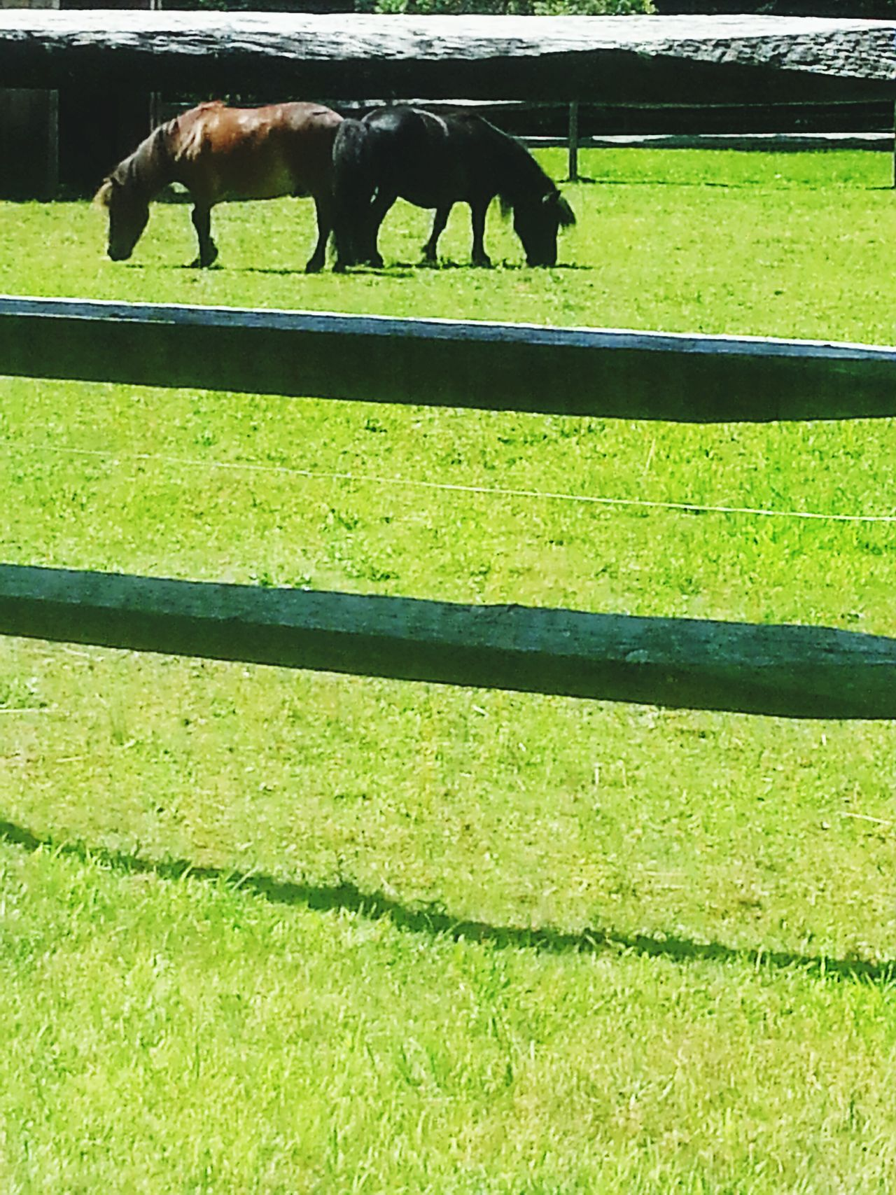 Babies Taking Photos Horses Naturelovers Grassfield Animals