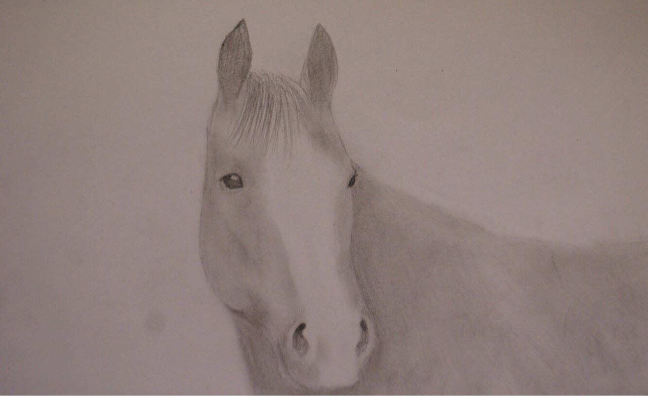 One Animal Animal Themes Mammal No People Domestic Animals Close-up Animals In The Wild Portrait Nature Nikon Day White Background Outdoors Horse Horses ArtWork Art And Craft Drawn Creativity Drawing - Art Product Drawing - Activity Draw Drawing