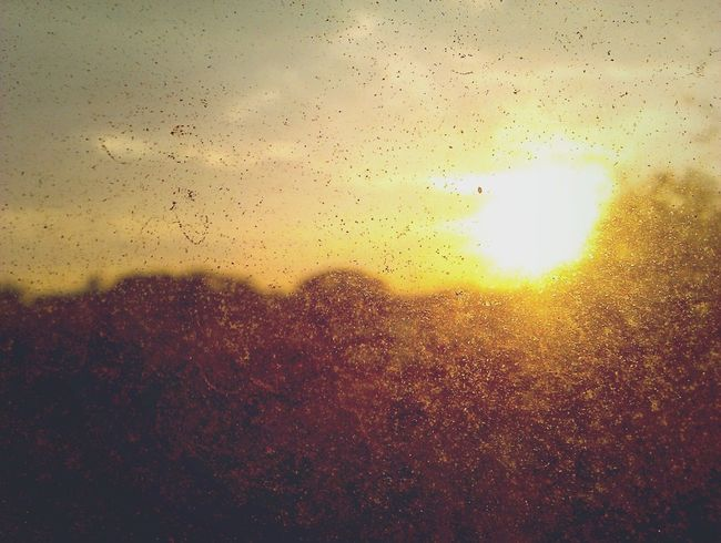 sunset. Cfilm. Sunset Sun Poppula Photos