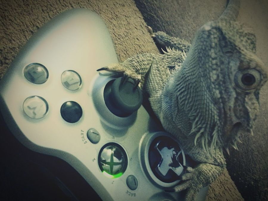 Animals Dragon Reptiles Xbox360 Video Gaming Xbox Controller Playing With The Animals Check This Out Justsnapped
