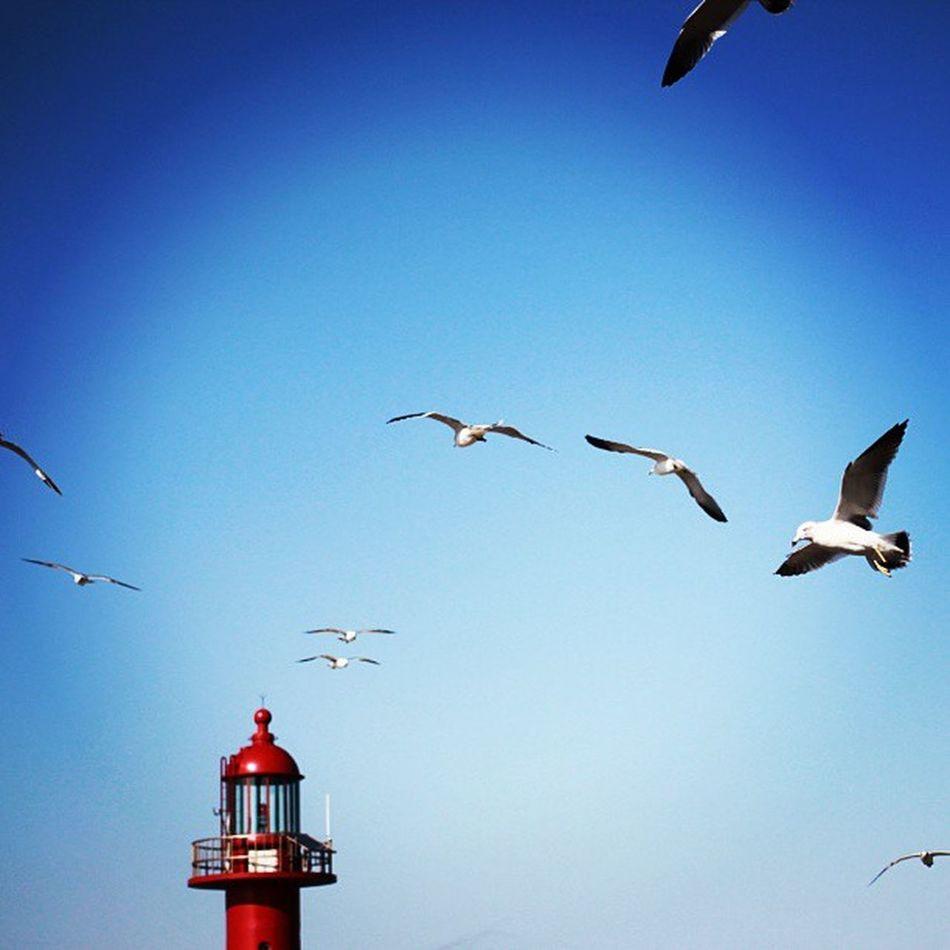 Red Blue Sky Lighthouse Seagull 파란하늘 빨간 등대 갈매기 이곳은 제부도