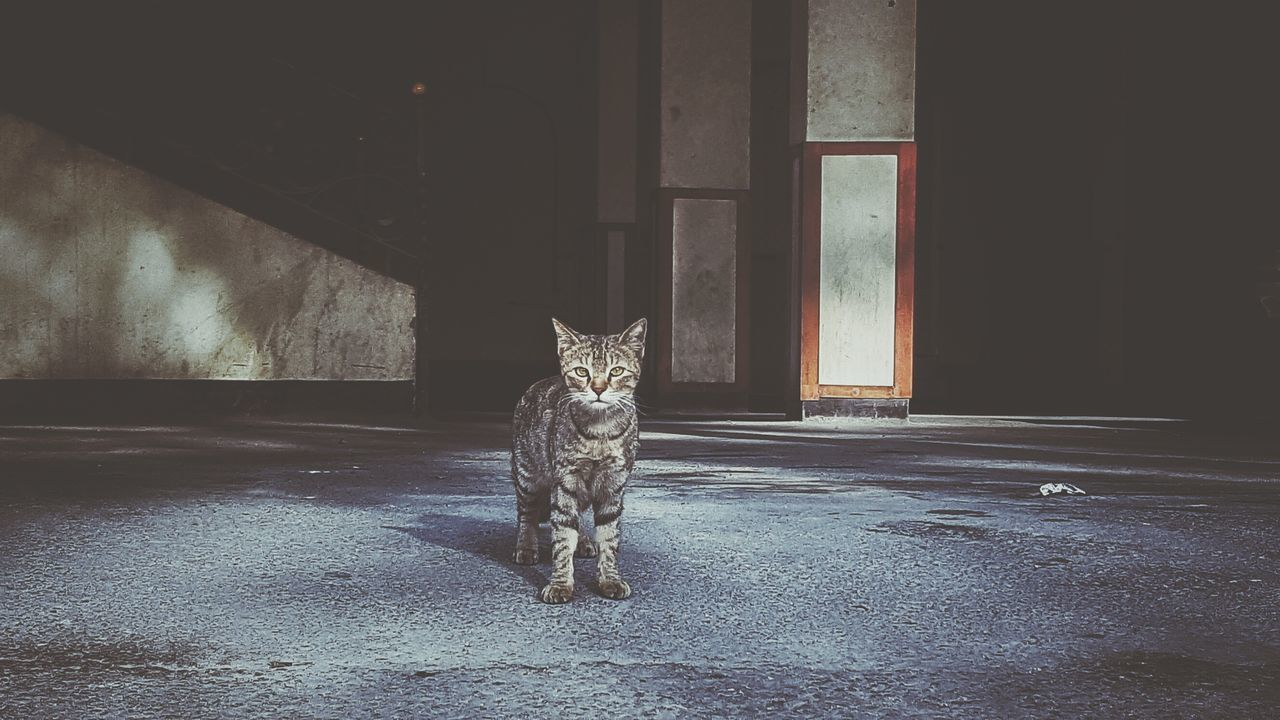 Domestic Cat Pets Animal Themes Animal Mammal Domestic Animals Feline Tail Meaw😺 Meaw Cat Cats Of EyeEm DXB Faded Random Bahrain Wildlife EyeEmNewHere Lieblingsteil
