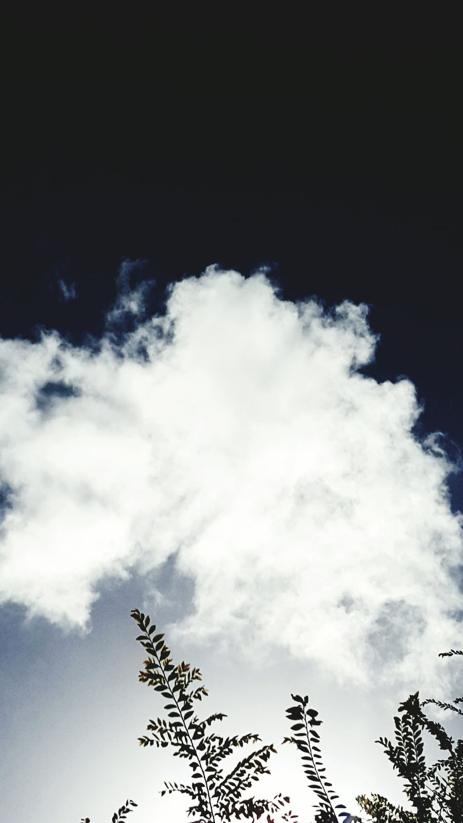 Cloud - Sky Low Angle View Tree Sky No People Nature Beauty In Nature Outdoors Day Sky_collection Sky And Clouds Cloudscape Series Cloudscape Clouds