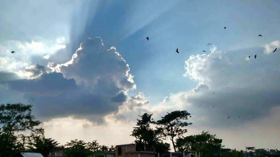 No Filter Birds Too Hot Slums In Kolkata 5mpcamera Heaven And Earth Happiness Happy People Nature Better Than Eco Mothernature India Spirng Just Came Hot Too Trees Moto E Sun Set Evening Sky Like The Pic