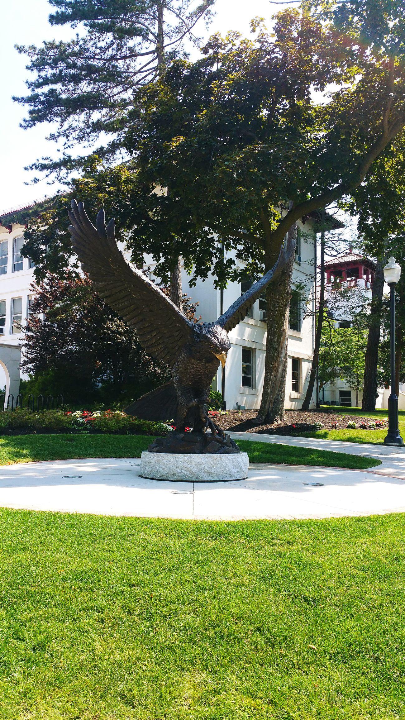 Redhawk Largebird Statue Campus Campuslife Montclairstateuniversity Alumni