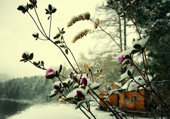 Water Nature Flower Trees Tree Snow House Natural Snowing Water_collection Nature_collection