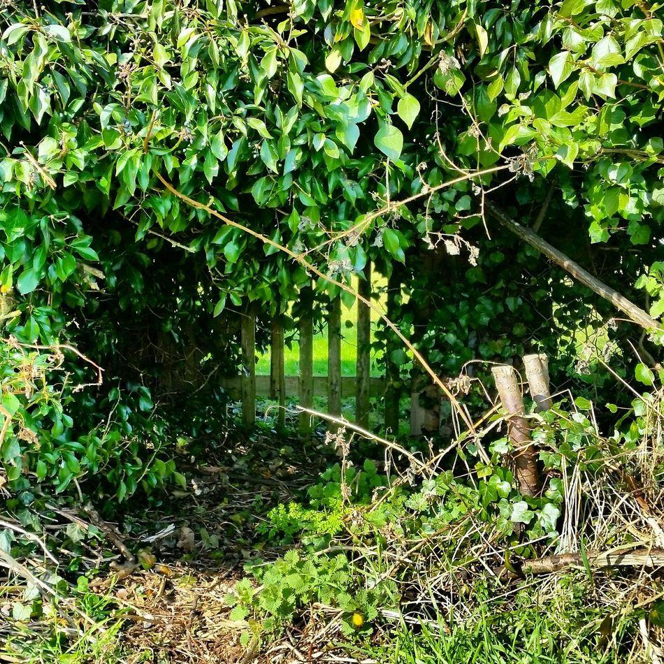 Fence Bushes Nature What Lies Beyond... Guarded  Secrets